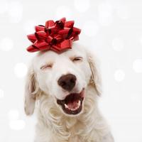 Regali ecologici cani Natale