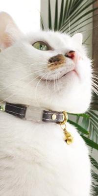 Collare gatti ecologico Noggins and Binkles