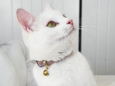 collare gatto ecologico nogging and binkles