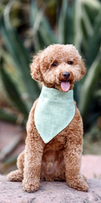 bandana sostenibile per cani Life Vegan Pets