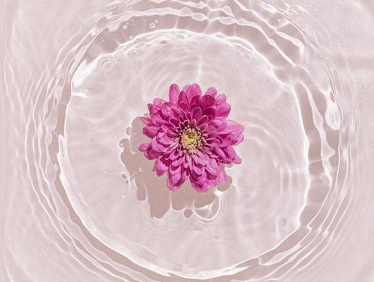 flower for Valentine Day