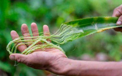 Pinatex fibra ananas