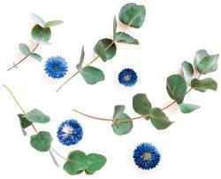 eucalipto e fiori